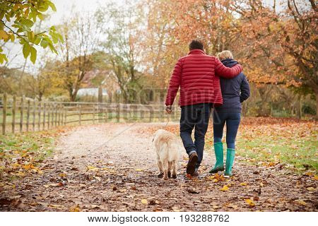 Rear View Of Mature Couple On Autumn Walk With Labrador