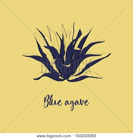 Blue Agave Hand Drawn Illustration In Sketch Style. Main Tequila Ingredient.