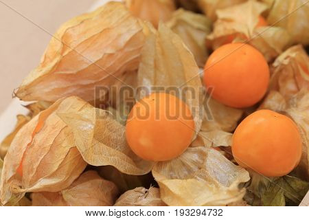 Cape gooseberry disclose leaf to see the fruit inside.