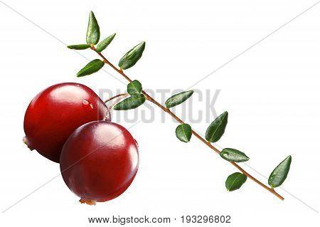 Cranberry Branch, Paths