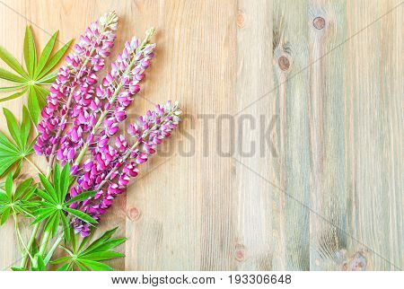 Lupine summer flowers on the wooden background. Selective focus at the lupine flowers. Summer flower background with pink colorful summer flowers of lupine. Summer flowers on the wooden surface, summer nature background