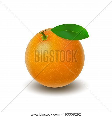 Isolated colored whole juicy orange with green leaf and shadow on white background. Realistic citrus fruit
