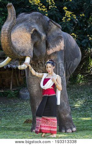 Pretty asian girl in traditional thai dress touching elephant's ivory