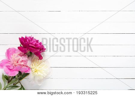 Peonies on white background. Floral wedding frame background with beautiful pink white purple peonies and copy space. Shabby chic, vintage style card for wedding, Happy Mother's day or Women's day