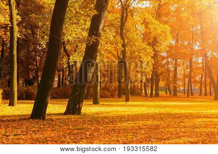 Autumn landscape - autumn park in with golden autumn trees in sunny weather, picturesque autumn landscape of autumn park trees under sunny autumn evening light. Bright autumn nature with autumn trees