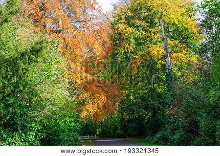 Beautiful Autumn park on a sunny day