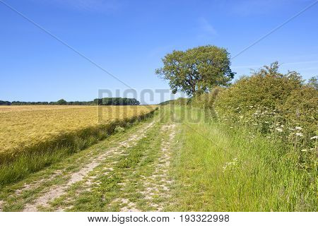 Golden Barley And Bridleway