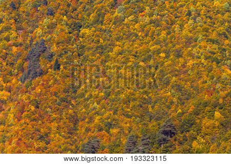 Background, Texture, Autumn Trees In Mestia, Georgia