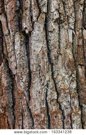 Dark fir bark background. Fir bark background. Tree bark texture
