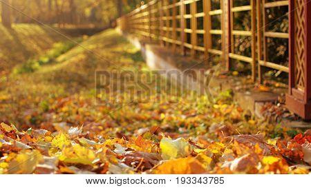 Beautiful autumn golden leaves carpet at Pushkin Tzar village park Russia