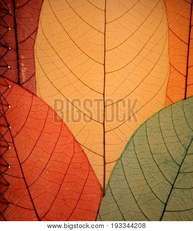 Vertical image of leafy background in colors of Fall