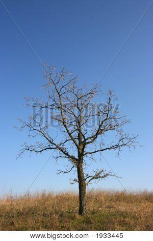 Gloomy Tree, All Alone