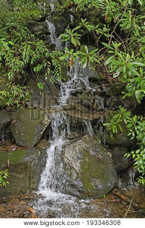 Hidden Falls in the Rhododendron in Great Smoky Mountains National Park in North Carolina