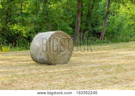View of the summer landscape with silage in meadow with forest on the background