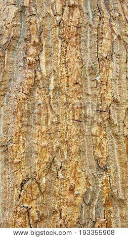 bark texture or tree bark texture background