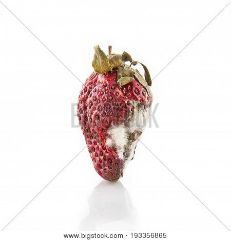 rotten strawberry with mildew isolated on white