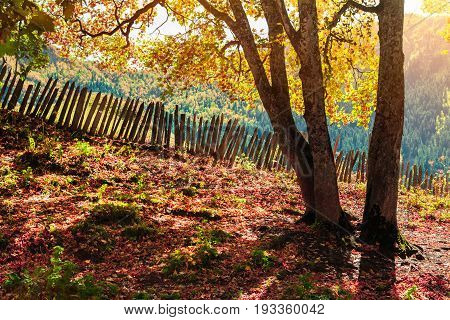 Colorful Autumn View In Caucasus Mountains Used As Background.