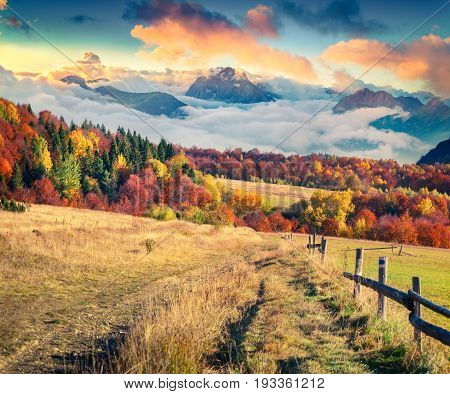 Colorful autumn scene in the mountains. Breathtaking sunrise in countryside with old road abd foggy mountain peack. Artistic style post processed photo.