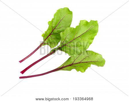 Beet leaves. Beetroot leaves fresh beet leaf isolated on white background.