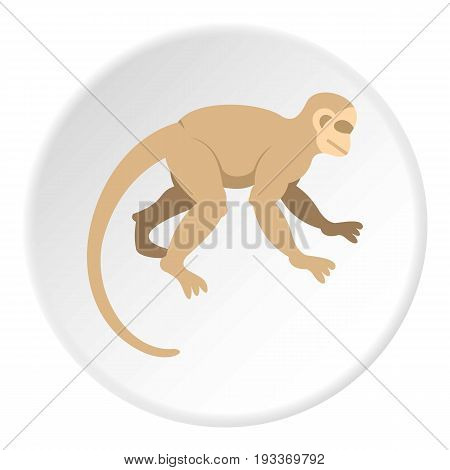 White capuchin icon in flat circle isolated on white background vector illustration for web
