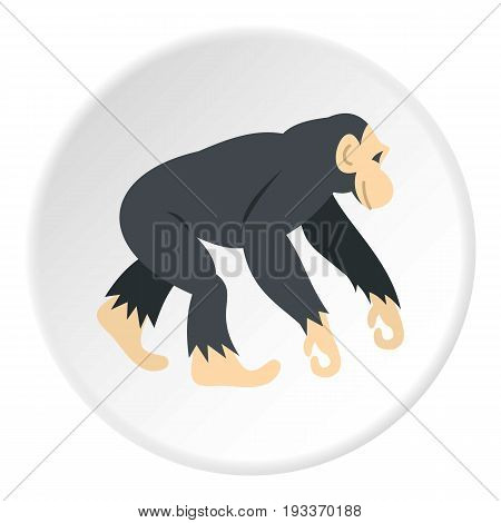Chimpanzee icon in flat circle isolated on white background vector illustration for web