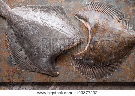 Raw flounders on the stone background top view horizontal