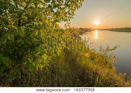 The bank of the river is covered with green grass and the sun at sunset over the river. A bush with foliage in the foreground, A beautiful yellow light from the sun