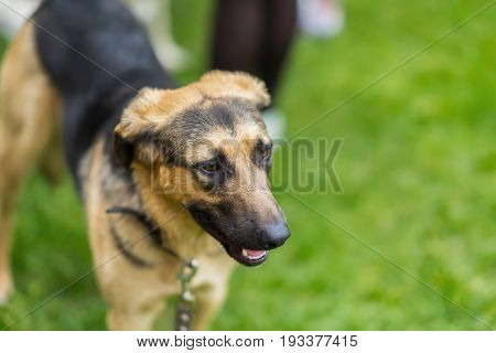 Dog in a shelter with sad eyes of hope, waiting to be adopted. Concept of social problem of homeless animals. With place for your text, for background use