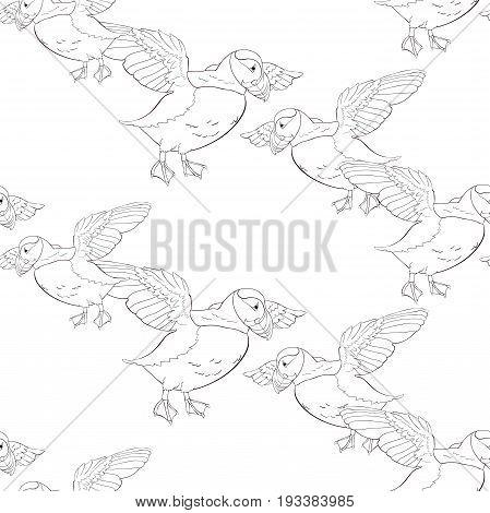 Coloring Seamless Pattern Bird Deadlock Australian Atlantic In Flight. Vector Illustration