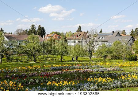 Bern Switzerland - April 14 2017: Variety of flowers planted in several rows together with trees create a garden behind which there are several residential houses. A few people can be seen there.