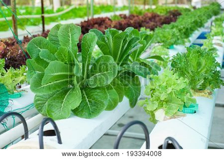 Small Rooftop Hydroponic Farming Soil-less sky farming Urban Gardening in Bangkok Thailand Hydroponics method of growing plants using mineral nutrient solutions in water without soil.