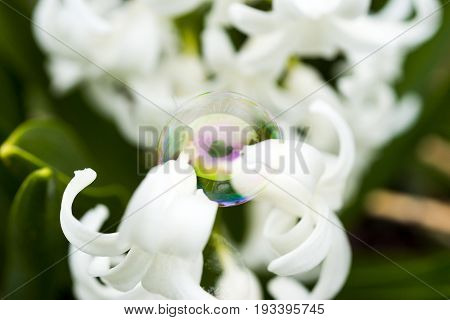 Bubble Balanced Delicately Between Two White Flowers Reflecting A Green Heart Shape In The Middle Of