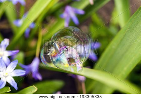 Three Perfect Soap Bubbles Balances Delicately To A Purple Flowering Plant, Intricate Reflections An