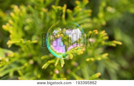 Delicate Soap Bubble Perched Gently On An Everygreen Leaf, Beautiful Circle Shining Like A Small Glo