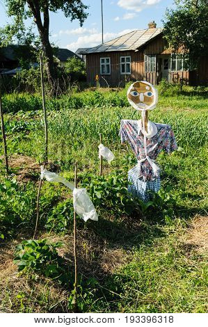 Scarecrow on the garden. Means for scavenging birds from the field of strawberries.