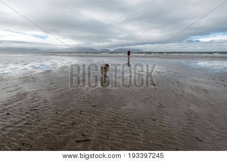Woman And Dog On Inch Beach In Irelend