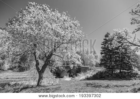 Light Spring Tree In Foreground Of Old Stone Foot Bridge
