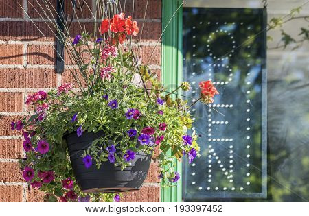Petunia hanging basket outside store window with unlit open sign open for business concept