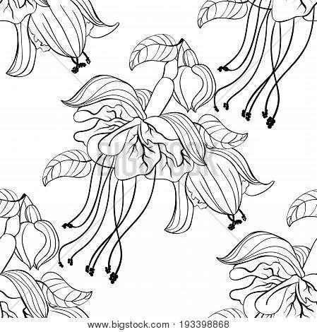 Seamless Pattern Coloring Fuchsia Flower Hybrid Ballerina. Vector Illustration