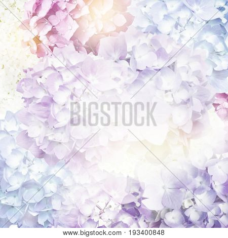 Colorful Flowers Blossom for background