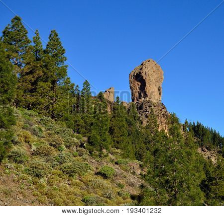 Pine forest, Roque Nublo and intense blue sky, Gran canaria, Canary islands