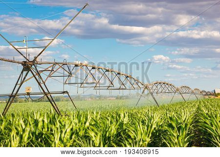 pivot sprinkler system watering a green field