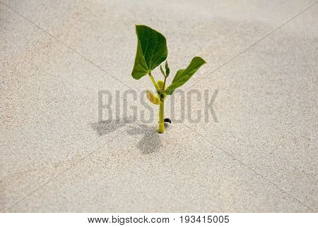 A sprout germinating in the sand the only green plant.