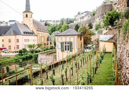 View on the saint Johns church and vineyards in Luxembourg city