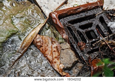 Drain Opening With Wet Leaves