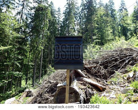 Black pheromone traps insects, Forest preservation, pheromone trap for bark beetle, (Ips typographus)