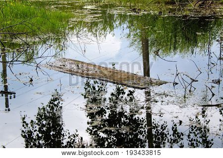 A board floating in the waters of a stagnant pond. Shadows of trees are reflected in the water. A lot of green vegetation on its banks.
