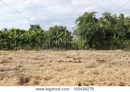 Dry meadows of tropical forest in Thailandconcept of nature and the climate of the world.