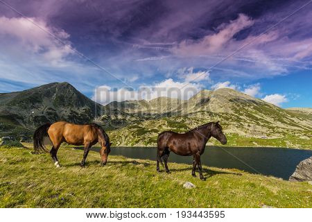 Wild horses roaming in the mountains in summer