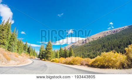 Alpine Forest